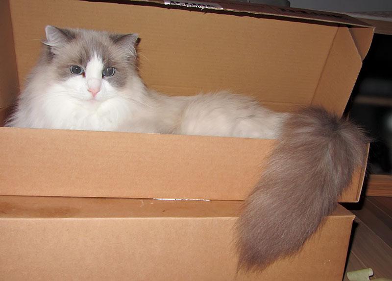Kot przesyłka